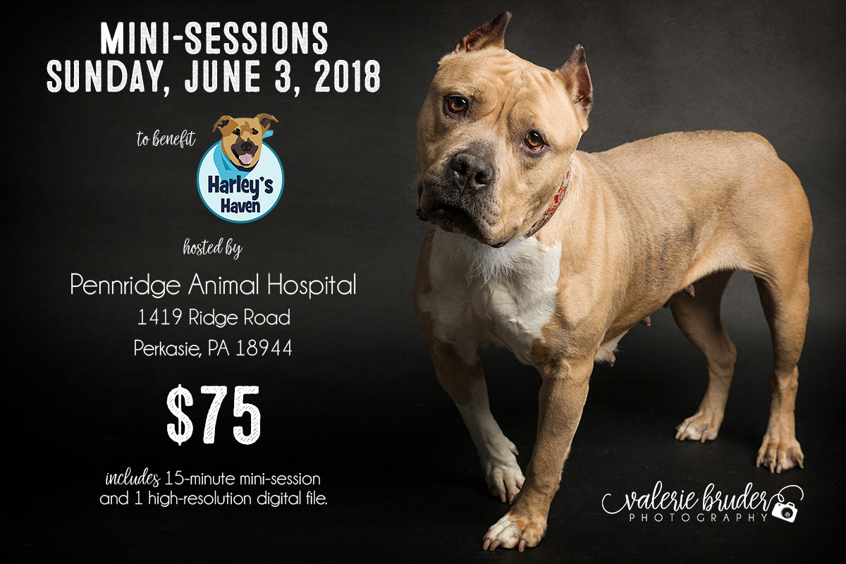 Mini-Sessions to Benefit Harley's Haven Dog Rescue » Valerie Bruder